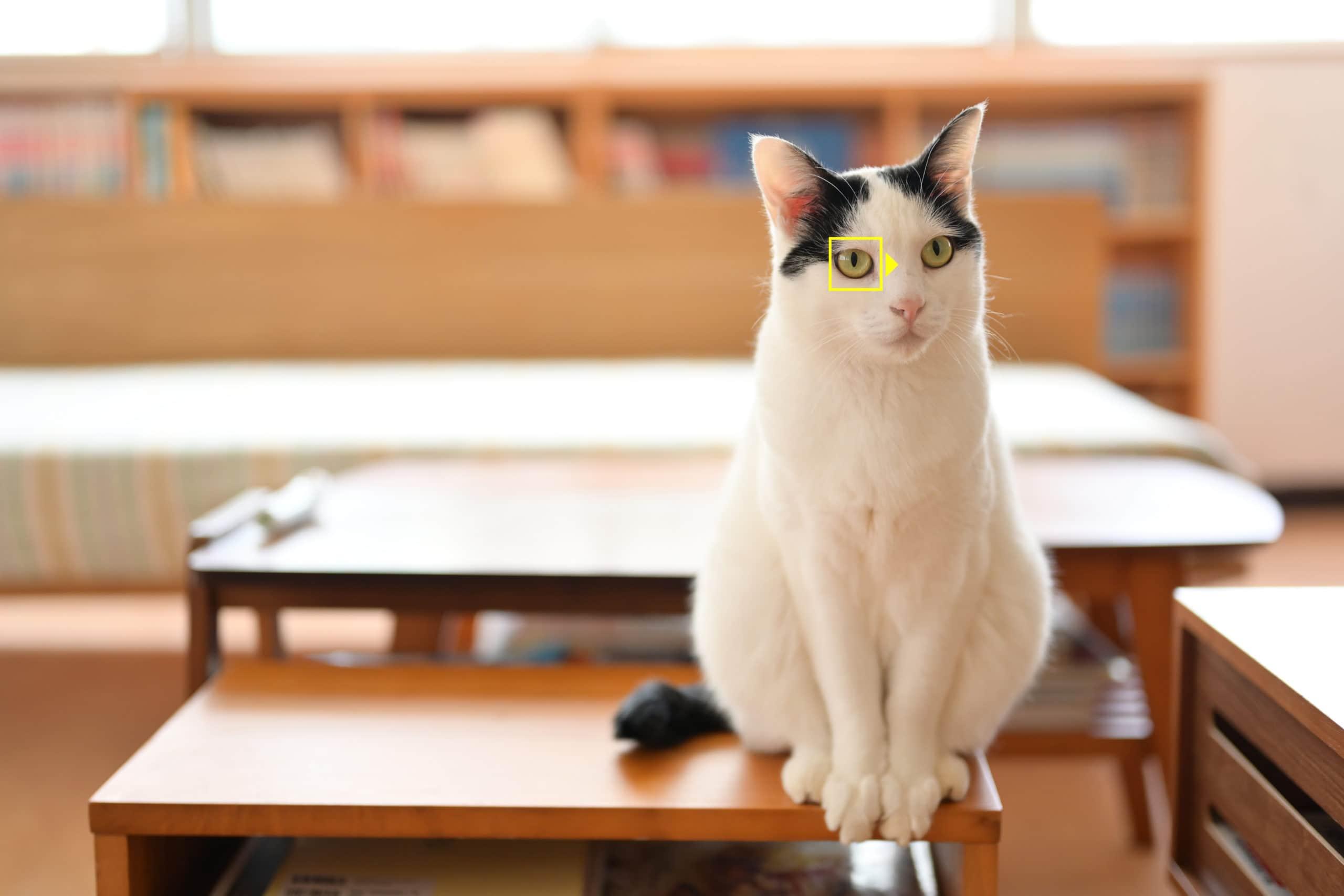 Tierautofokus bei Nikon Z7 / Z6 - Katze | Quelle: Nikon GmbH