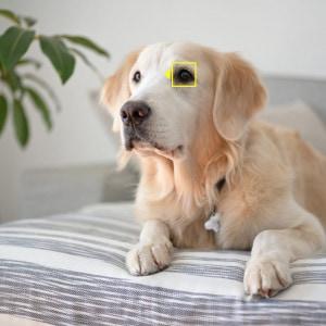 Nikon Z Kameras: jetzt ideal für Tierbilder und Selfies