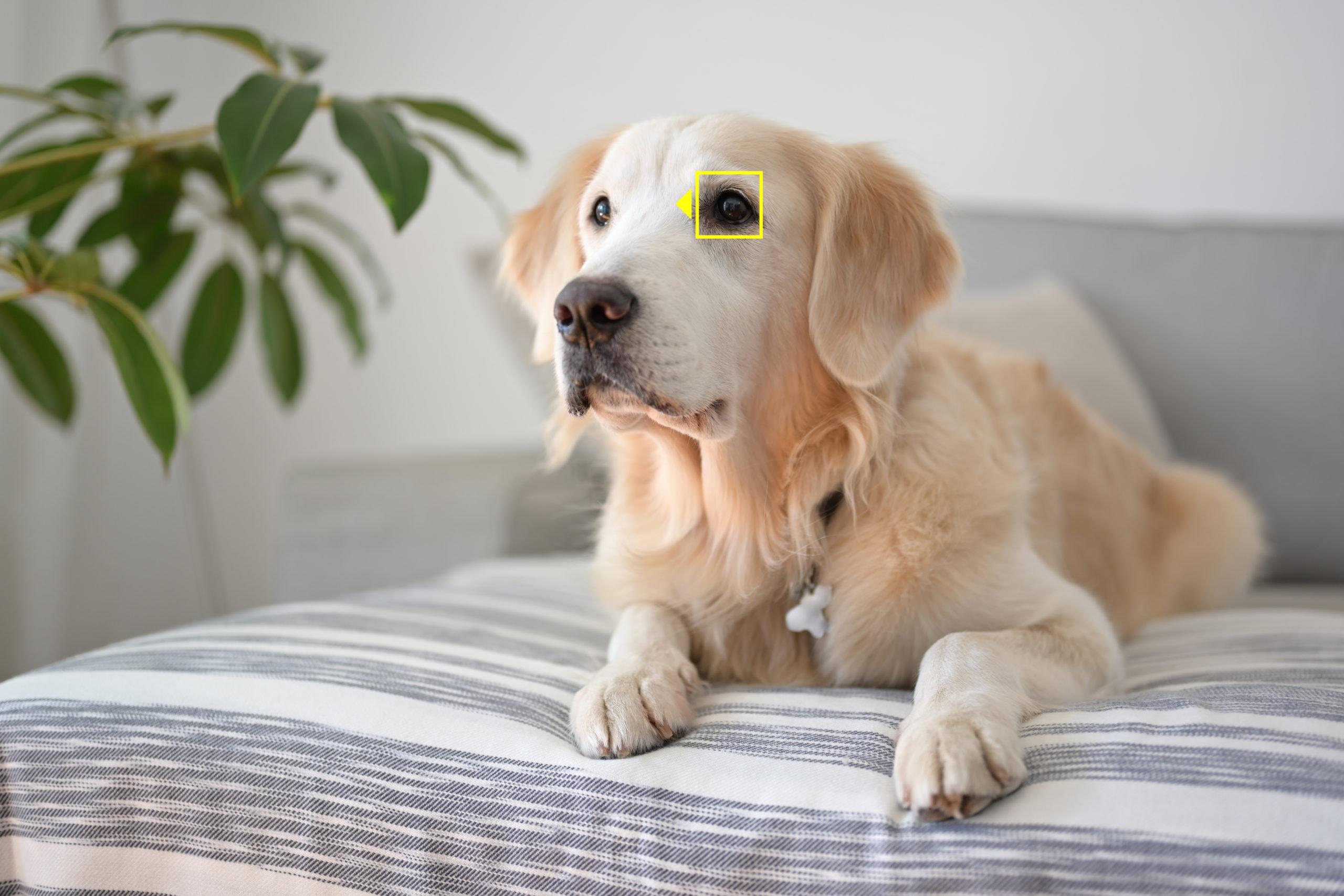 Tierautofokus bei Nikon Z7 / Z6 - Hund | Quelle: Nikon GmbH