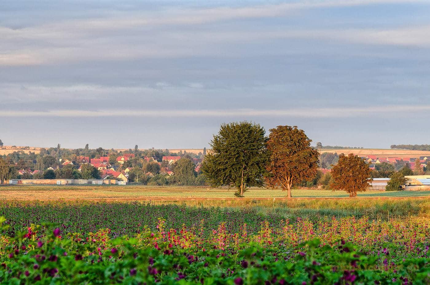 August - An einem schönen Morgen macht diese Familie einen kleinen Ausflug.. - Foto: Michael Stollmann
