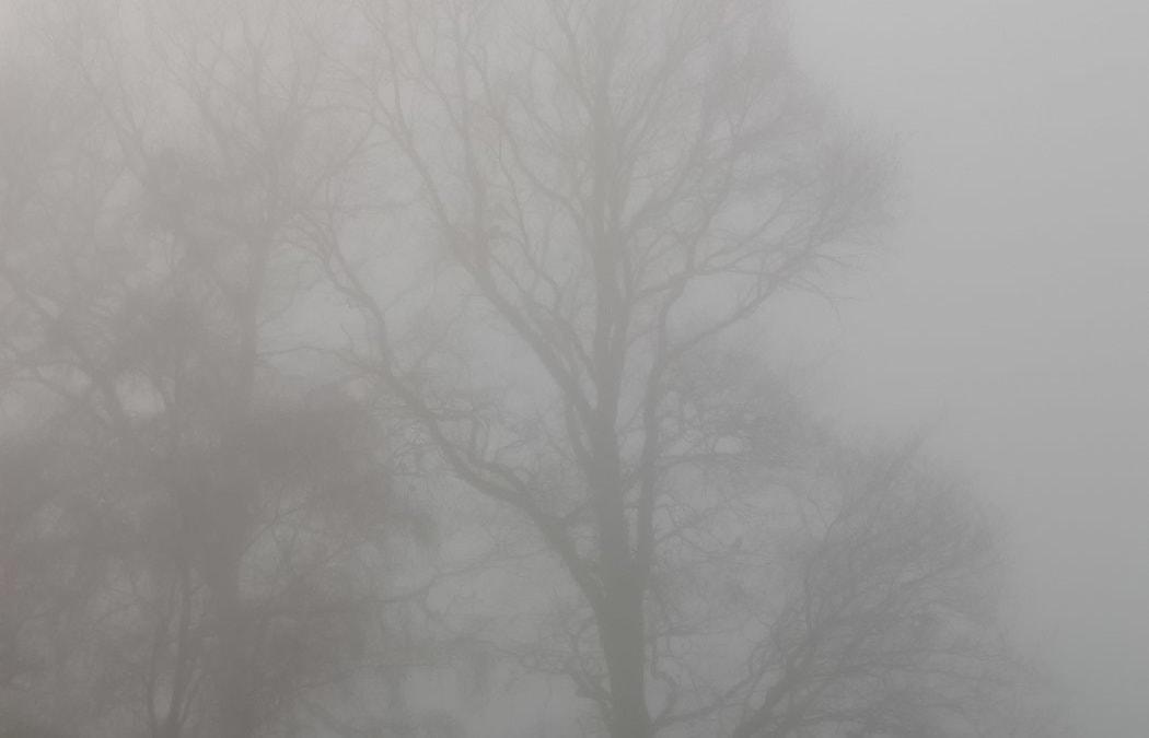 Novembermorgen – Bäume im Nebel