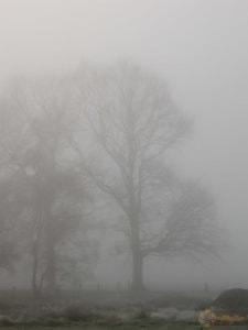 Bäume im Nebel | Foto: Michael Stollmann - fotoglut.de