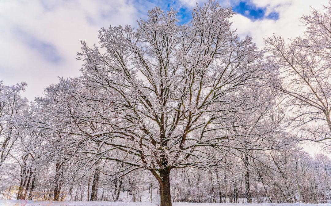 Winterbaum