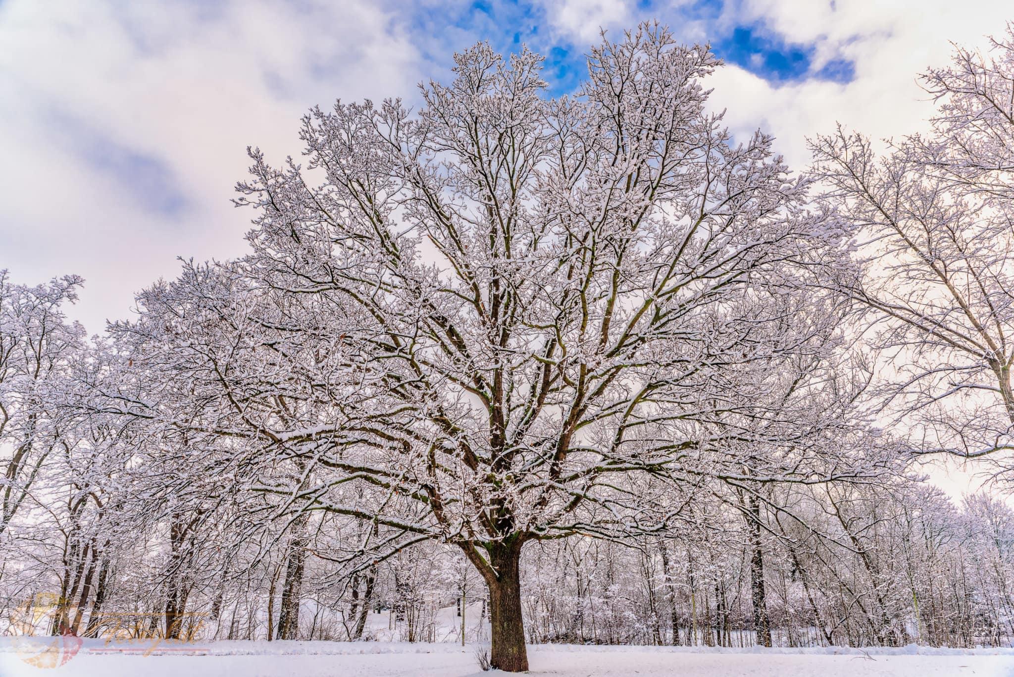 Winterbaum - © FotoGlut - Michael Stollmann