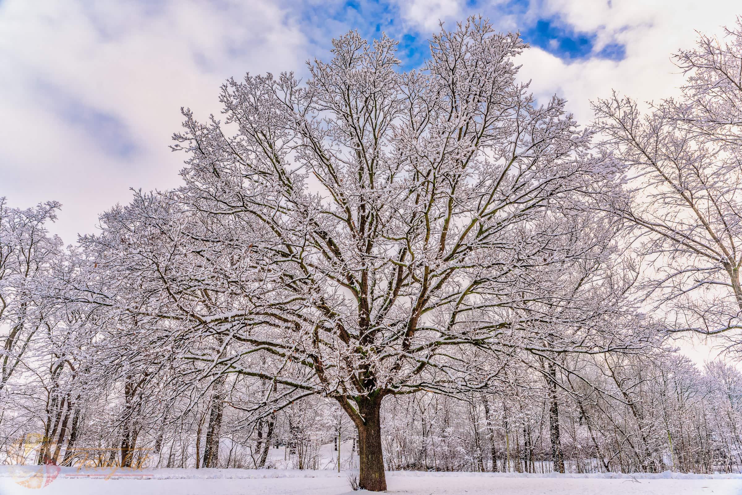 Winterbaum - © M. Stollmann | fotoglut.de