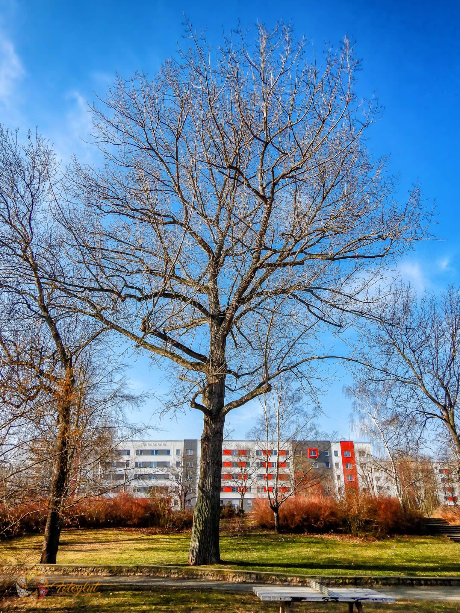 Alter Baum im Gera Park - © Michael Stollmann