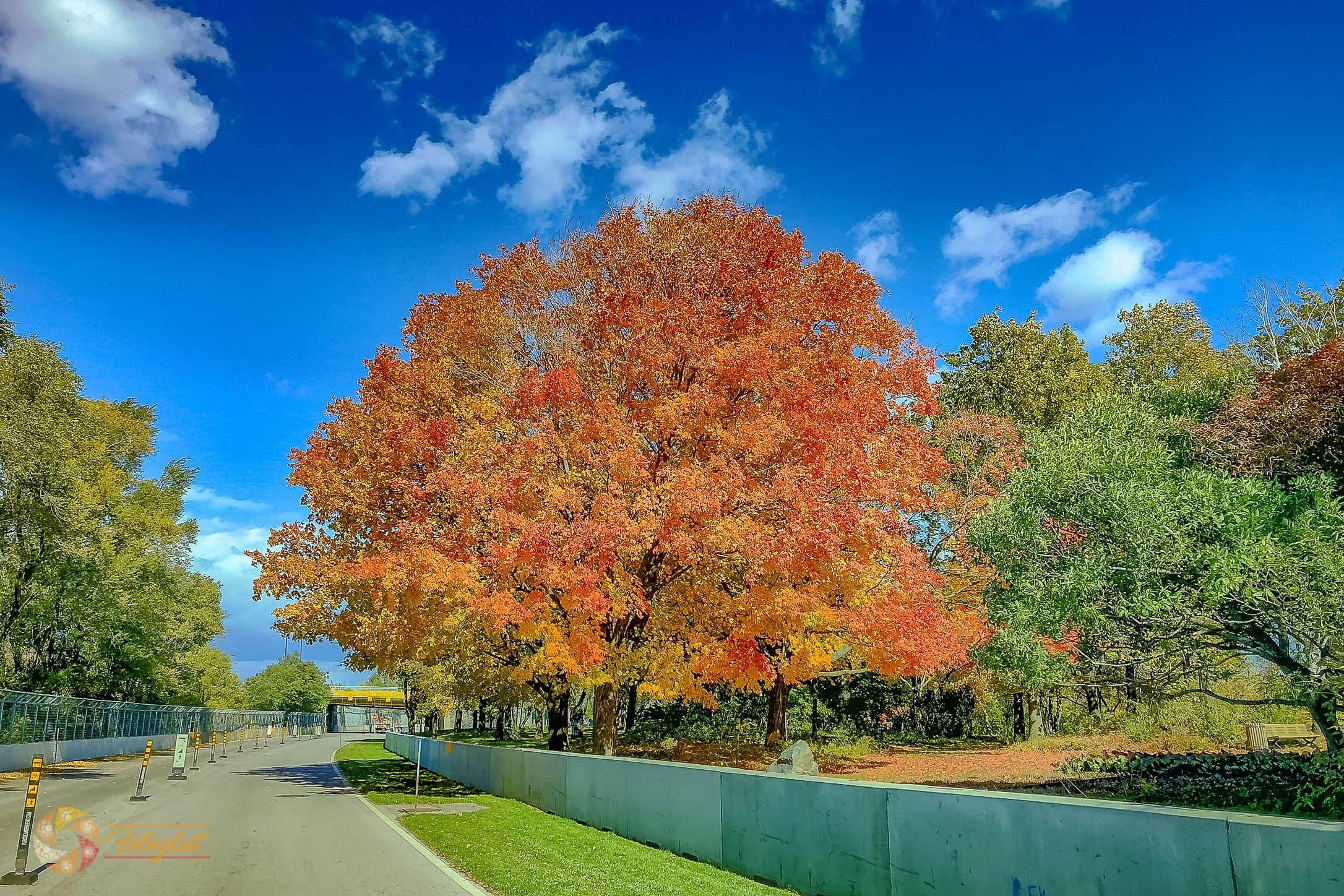 Circuit Gilles-Villeneuve - herbstlicher Baum an der Rennstrecke