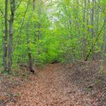 Hier entlang ... - © FotoGlut - Michael Stollmann