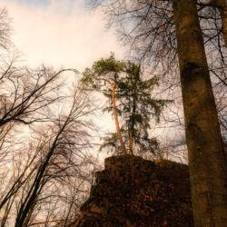 Burgenweg Kinding - Baum im Sonnenstrahl